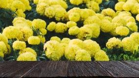 желтый цветок ноготк в саде & x28; image& x29 нерезкости; с выбранным focu стоковое фото rf