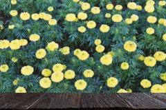 желтый цветок ноготк в саде & x28; image& x29 нерезкости; с выбранным focu стоковые изображения