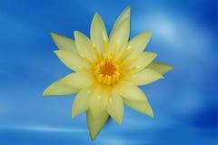 Желтый цветок лотоса Стоковое Фото