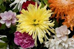 Желтый цветок хризантемы Стоковое фото RF