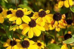 Желтый цветок Стоковые Фото