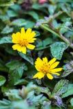 Желтый цветок Стоковое Фото