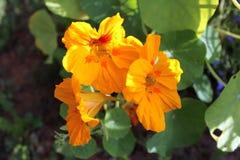 Желтый цветок стоковая фотография rf