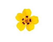 Желтый цветок Стоковое Изображение RF