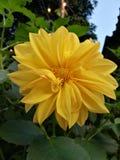 Желтый цветок стоковые фотографии rf