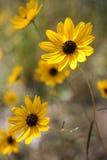 Желтый цветок стоковое фото rf