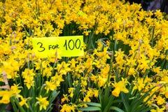 Желтый цветочный горшок на полке стоковая фотография