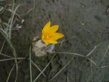 Желтый цветочный сад растя одно Стоковые Фотографии RF