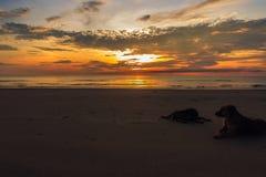 желтый цвет ландшафта и неба восхода солнца Стоковые Фотографии RF