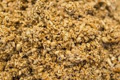 желтый цвет арахиса предпосылки текстурированный заедк Стоковое фото RF