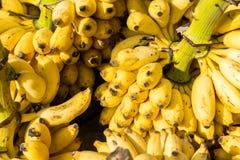 желтый цвет банана зеленый Стоковые Фото