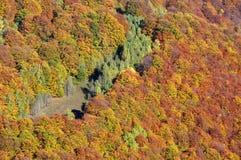 желтый цвет вала листьев падения предпосылки осени Красочный ландшафт леса в горах Стоковое Изображение