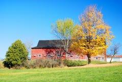 желтый цвет вала неба голубого пасмурного ландшафта поля падения сиротливый Стоковая Фотография RF