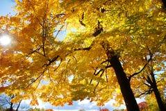 желтый цвет вала неба голубого пасмурного ландшафта поля падения сиротливый стоковая фотография