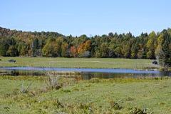 желтый цвет вала неба голубого пасмурного ландшафта поля падения сиротливый Стоковое Изображение RF