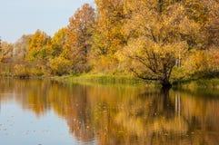 желтый цвет вала неба голубого пасмурного ландшафта поля падения сиротливый Листва осени красочная над озером с красивым Стоковое Изображение RF