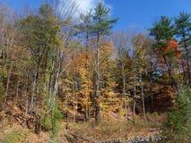 желтый цвет вала неба голубого пасмурного ландшафта поля падения сиротливый Стоковые Фото