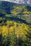 желтый цвет валов солнца пущи осени осины светя Стоковое Изображение