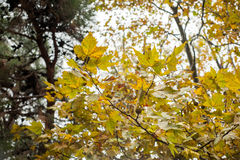 желтый цвет вектора померанцового красного цвета предмета зеленого цвета диско шарика Стоковые Изображения