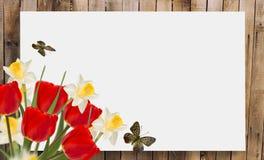 желтый цвет весны лужка одуванчиков предпосылки полный Место для вашего текста Стоковая Фотография RF