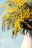 желтый цвет весны лужка одуванчиков предпосылки полный Стоковые Фото