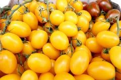Желтый цвет вишни томата Стоковое Изображение