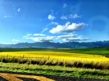 Желтый цвет встречает синь Стоковые Фотографии RF