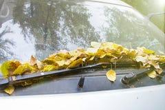 Желтый цвет выходит на фронт старого стекла автомобиля Стоковые Изображения