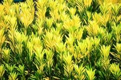 Желтый цвет выходит с ветвями дерева над голубым небом Стоковая Фотография RF