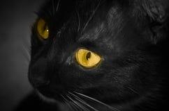 Желтый цвет глаза черного кота стоковое изображение