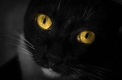 Желтый цвет глаза черного кота стоковое изображение rf
