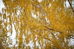 Желтый цвет леса ландшафта осени Стоковое фото RF