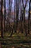 Желтый цвет леса осени выходит солнечный день стоковая фотография
