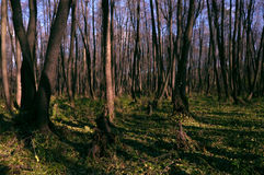 Желтый цвет леса осени выходит солнечный день стоковая фотография rf