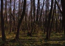 Желтый цвет леса осени выходит солнечный день стоковые изображения rf