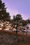 Желтый цвет леса осени выходит солнечный день стоковое фото rf