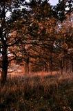 Желтый цвет леса осени выходит солнечный день стоковое изображение