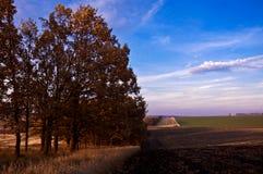 Желтый цвет леса осени выходит солнечный день стоковые фото