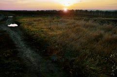 Желтый цвет леса осени выходит солнечный день стоковые фотографии rf