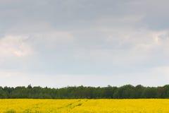желтый цвет лета rapeseed панорамы ландшафта поля стоковое изображение rf