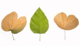 Желтый цвет зеленого цвета листьев осени nostalgy Стоковые Изображения