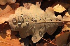желтый цвет листьев осени Стоковое Изображение