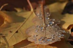 желтый цвет листьев осени Стоковые Фото