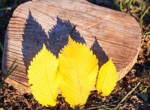 желтый цвет листьев 3 Стоковые Изображения RF