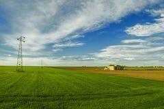 Желтый цвет и зеленый цвет поля Стоковые Фото
