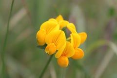 Желтый цвет и самостоятельно Стоковые Изображения