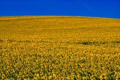 Желтый цвет и синь стоковые изображения rf