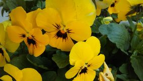 Желтый цвет и чернота стоковые изображения rf