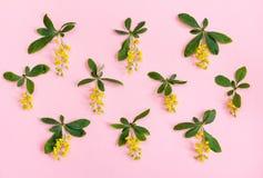 желтый цвет картины сердца цветков падения бабочки флористический Желтые цветки на розовой предпосылке Взгляд сверху Стоковые Фотографии RF