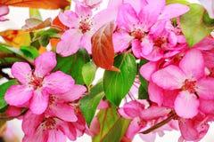 желтый цвет картины сердца цветков падения бабочки флористический поднимающее вверх поля глубины конца цветения яблока отмелое Стоковое Изображение RF